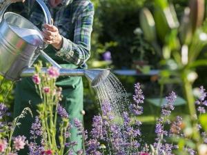 gardening-for-health